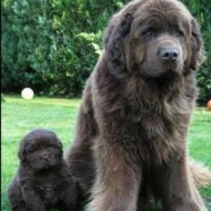 Jake, Neal Bishop's dog.